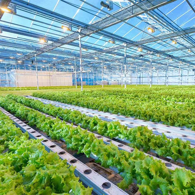 Intelligent Adjustable Height Greenhouse  Lightweight Solar System Frame Photovoltaic Agricultural Mounting Structure